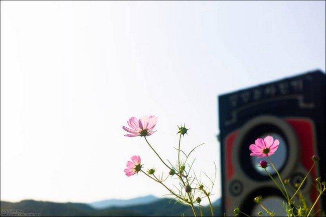 camera cafe flowers