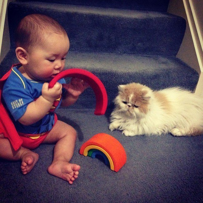 cat baby playing stairs