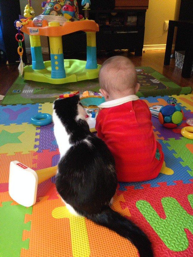 cat baby toys