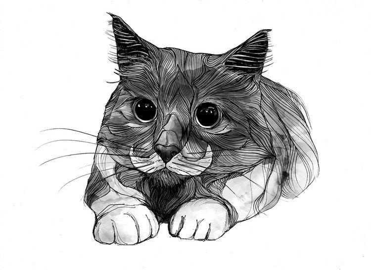 cat line art