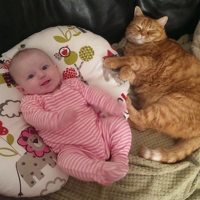 cat nap baby