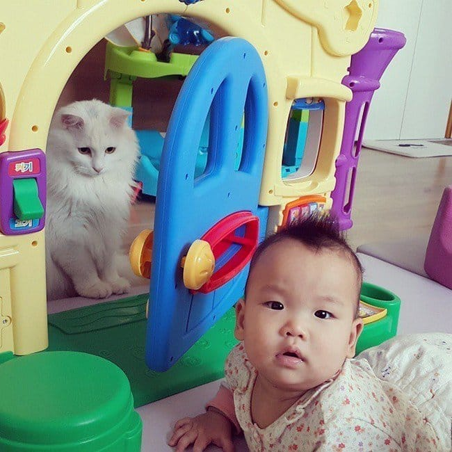 cat playhouse baby