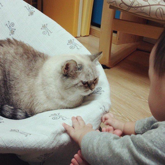 cat seat baby