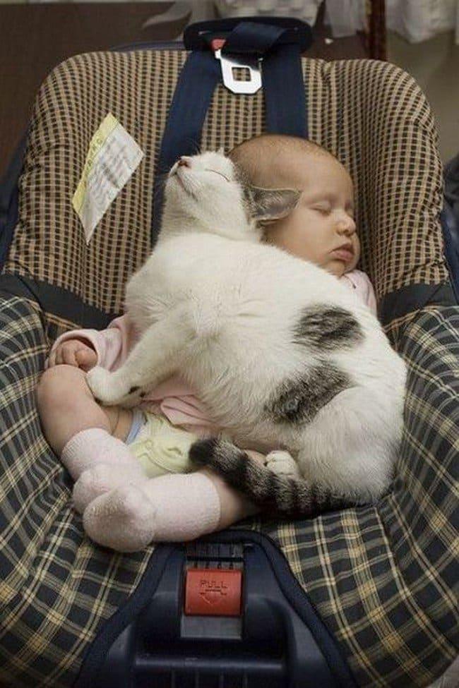 cat sleeping baby