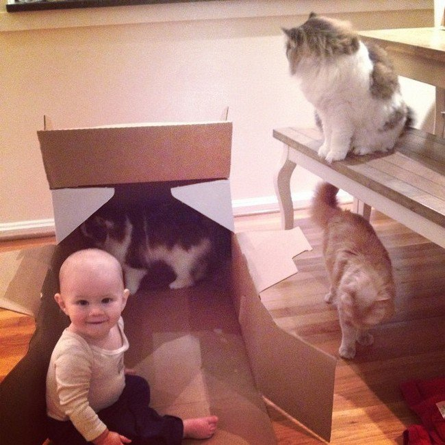cats in box baby