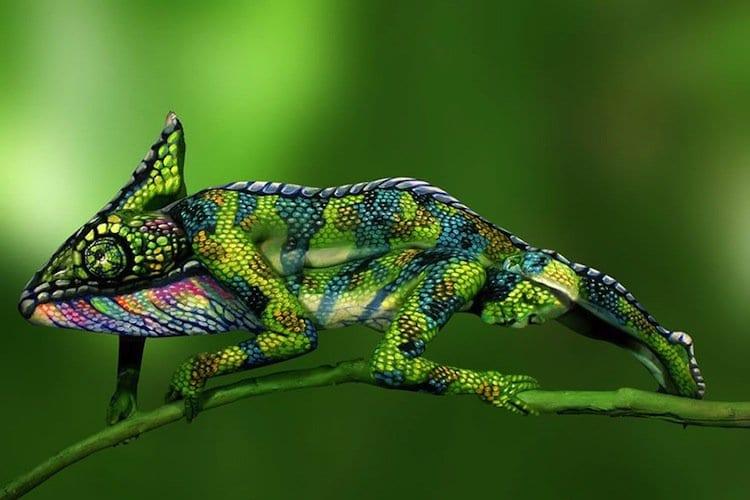 chameleon-first