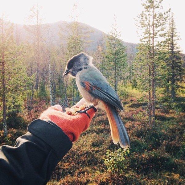 couple-traveling-around-world-photography-samuel-hildegunn-bird
