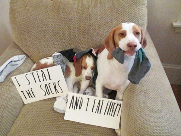 dog-shaming-best-socks