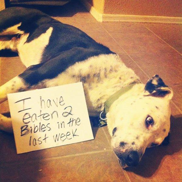 dog-shaming-bibles