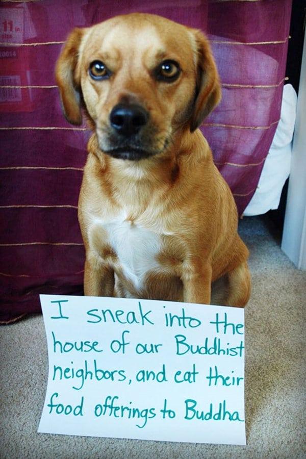 dog-shaming-buddha