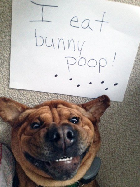 Dog shaming poop