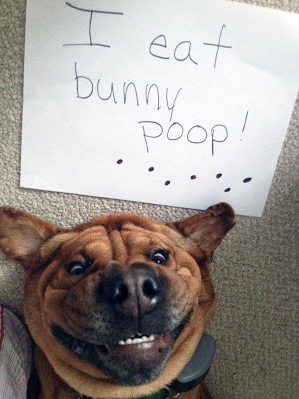 dog-shaming-bunny-poop