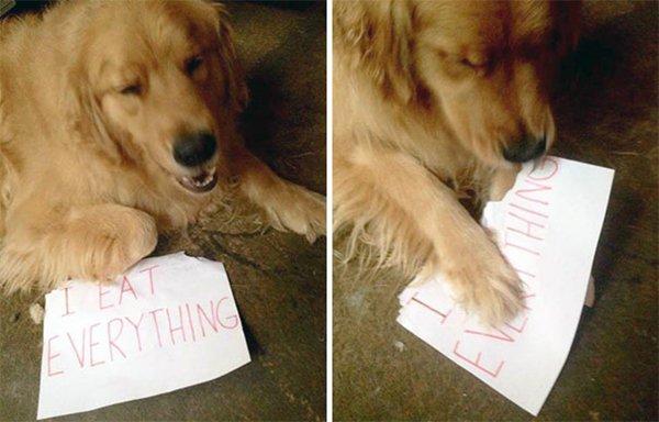 dog-shaming-eat