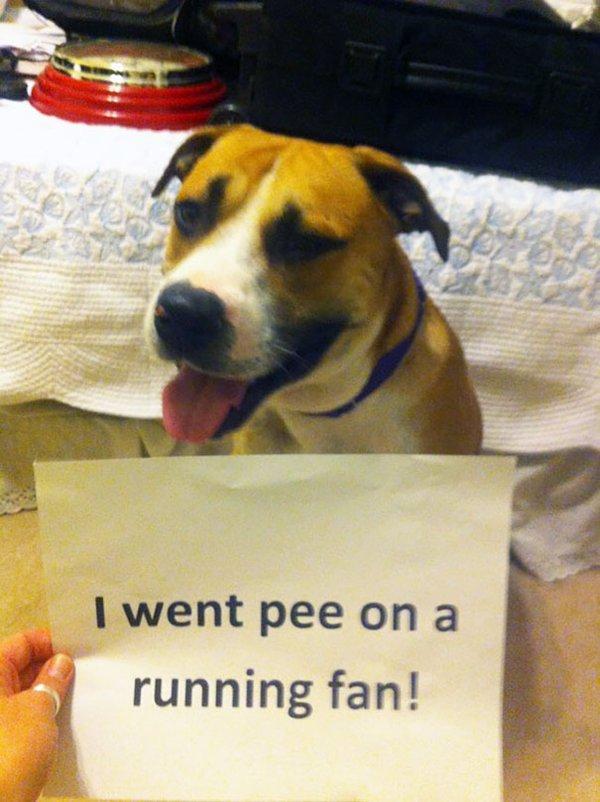 dog-shaming-fan