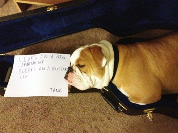 dog-shaming-guitar