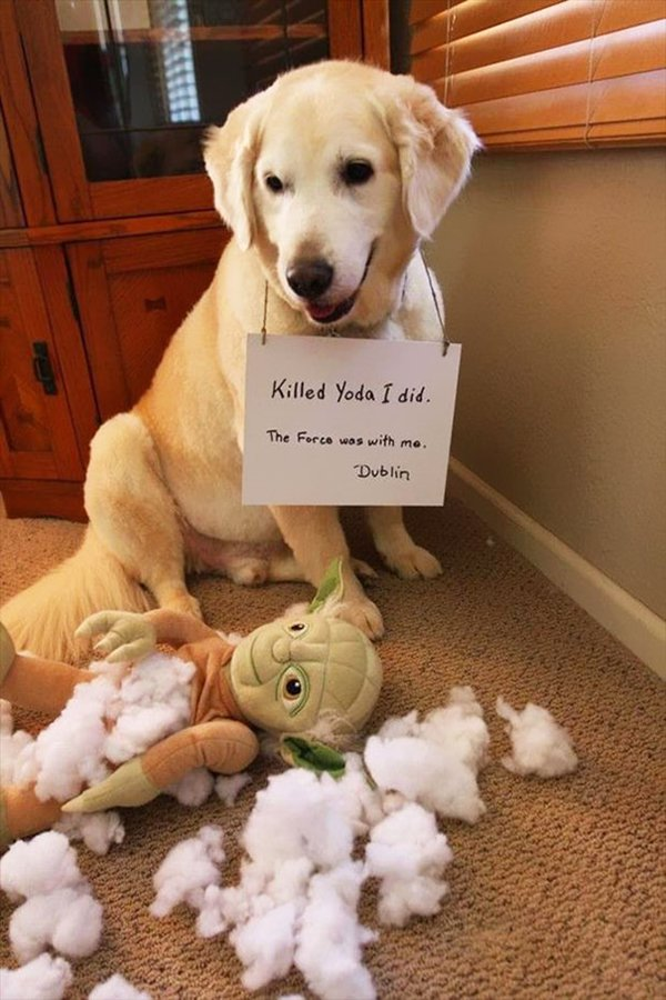dog-shaming-kill-yoda