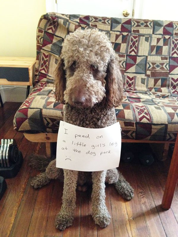 dog-shaming-little-girl