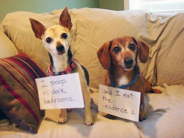 dog-shaming-poop