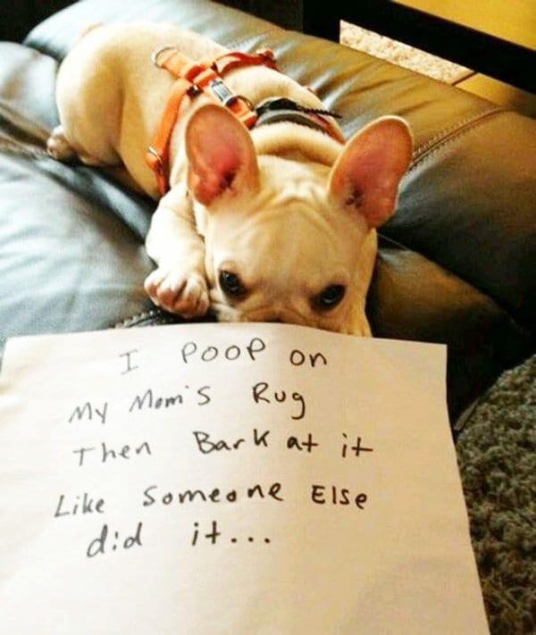 dog-shaming-rug