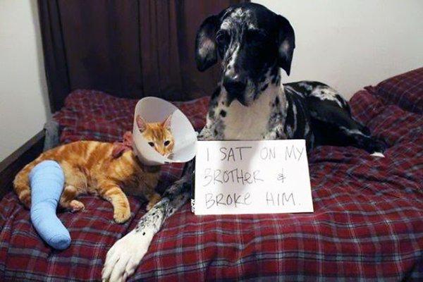 dog-shaming-sit