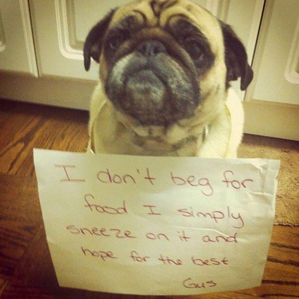 dog-shaming-sneeze