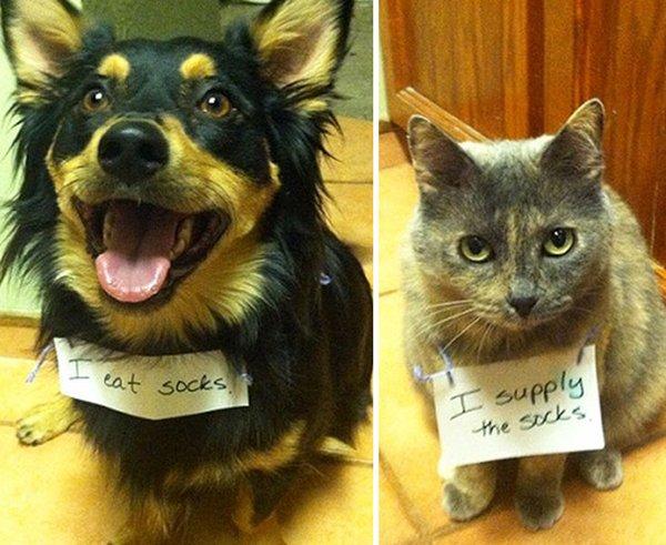 dog-shaming-socks