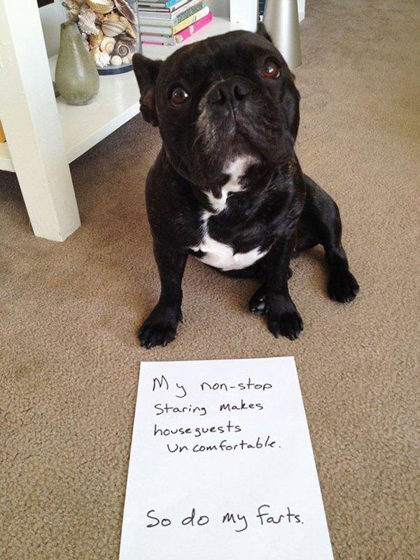 dog-shaming-staring