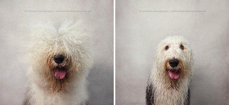 dog-sheep