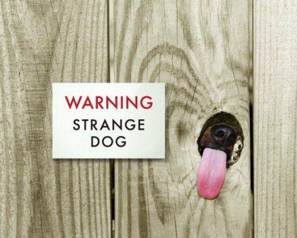 dog tongue fence strange