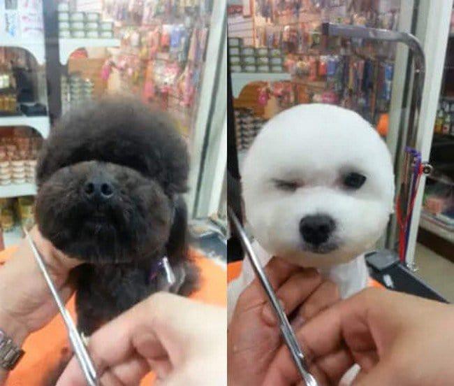dogs getting hair cut