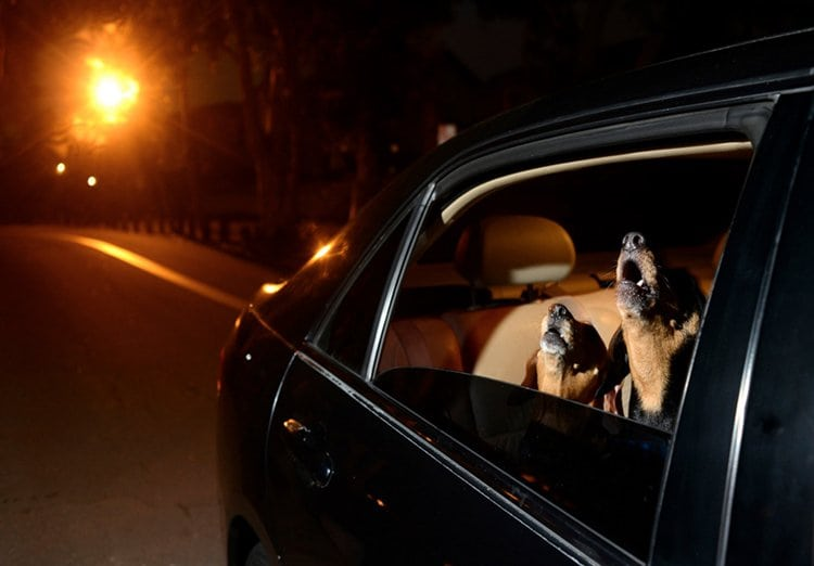 dogs-in-cars-howl