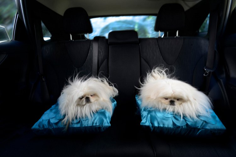 dogs-in-cars-pillow