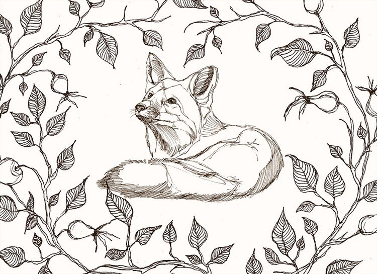 fox branches line art