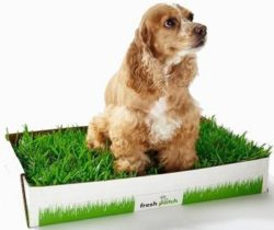 fresh grass disposable dog potty