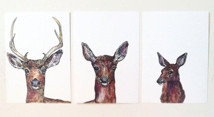 janie-stapleton-deer