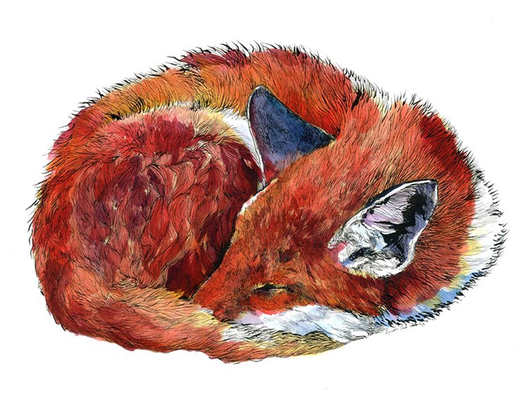 janie-stapleton-fox