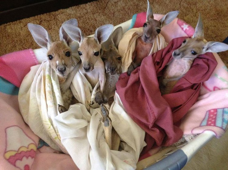 Meet The Man Who Has Taken On The Role Of A Quot Kangaroo Mom