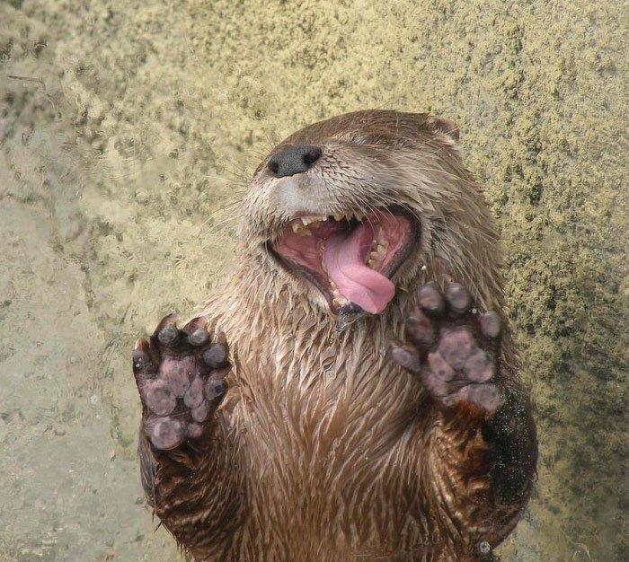 lick-otter