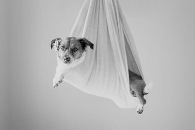 newborn-photo-shoot-with-dog-sling