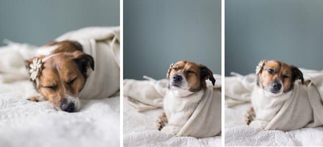 newborn-photo-shoot-with-dog-three