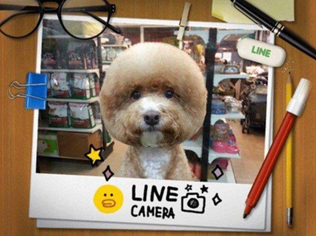 photo dog round haircut