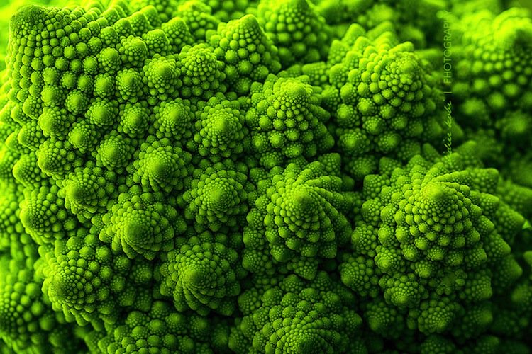 plants-brocoli