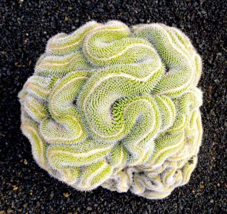 plants-cactus