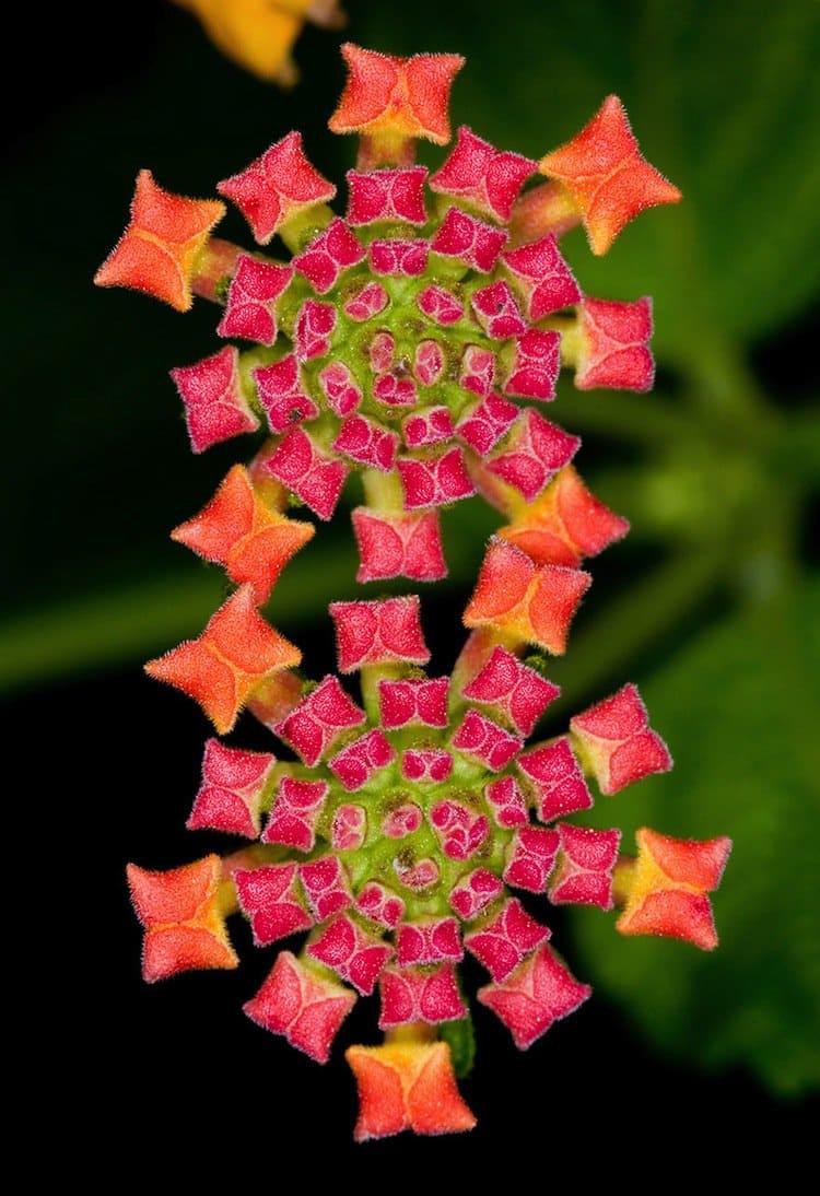 plants-carpet