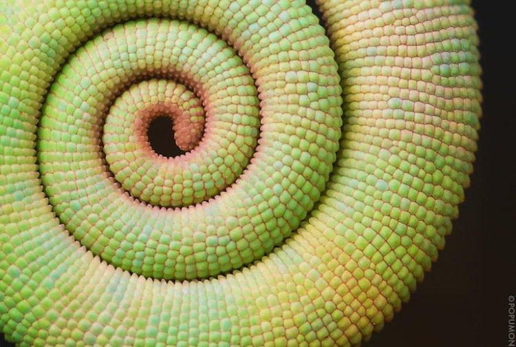 plants-chameleon