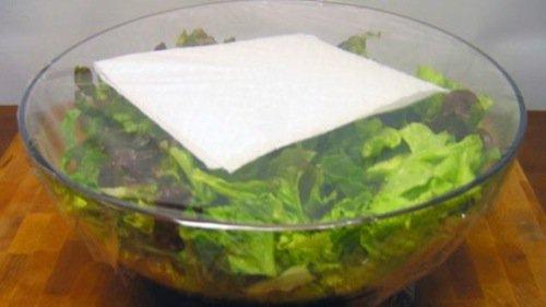 stuff-lettuce