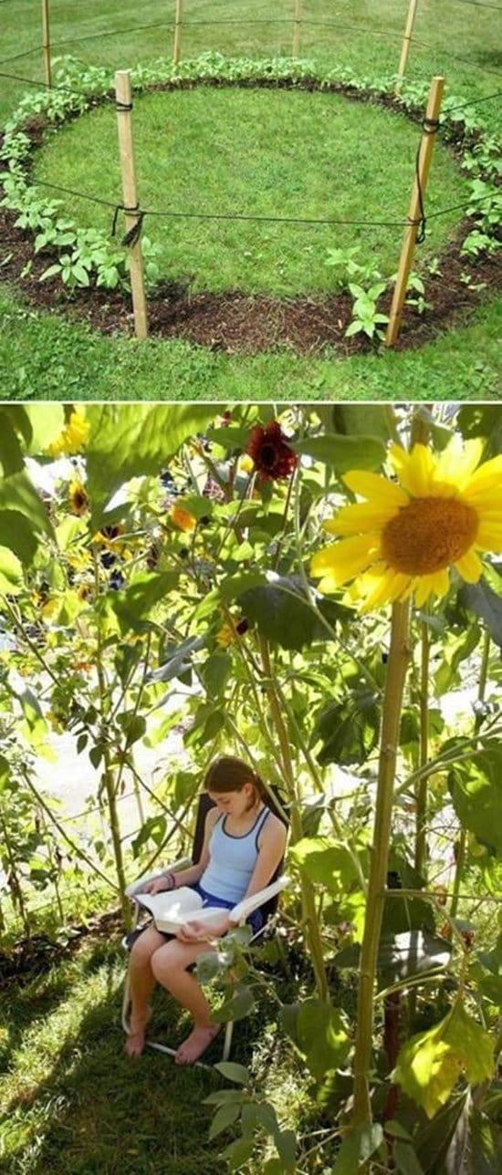 sunflower-fort