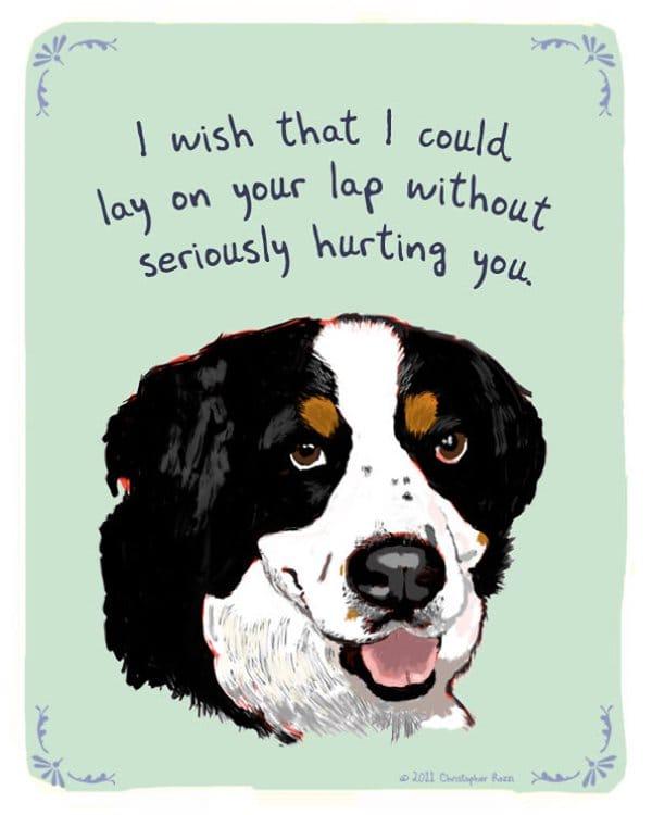 tiny-confessions-lap-dog