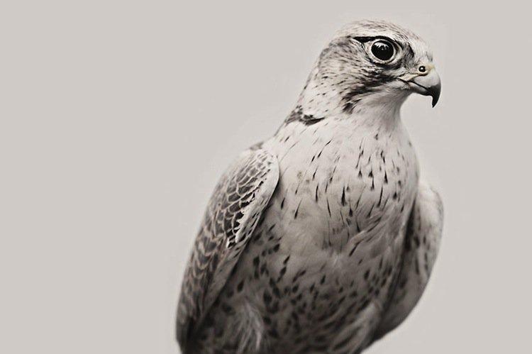 troy-hawk