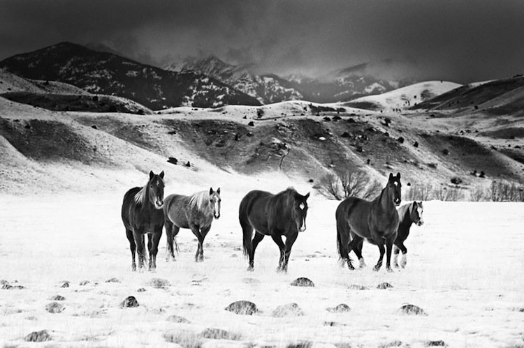 troy-horses